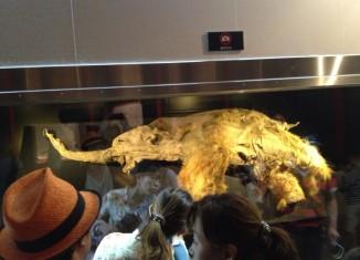 pui de mamut