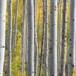 trees-690727_960_720