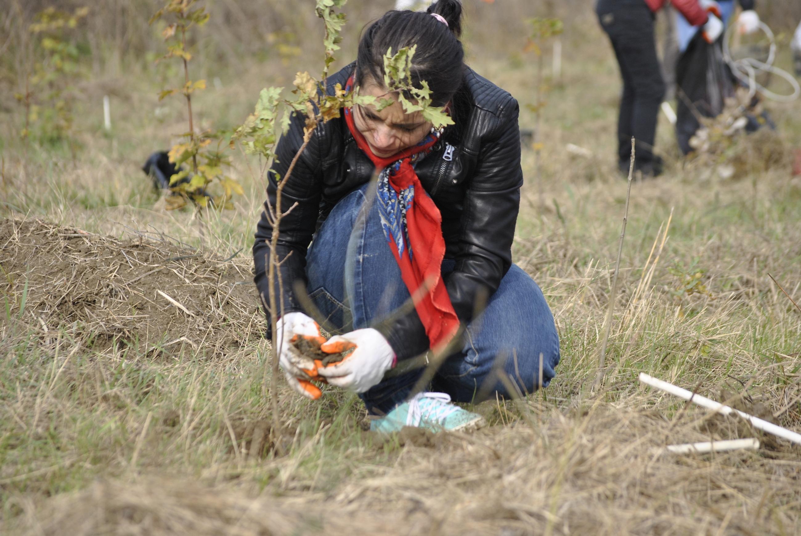 reîmpădurirea româniei