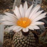 cactusi-levai-01