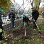 plantare pomi bucuresti