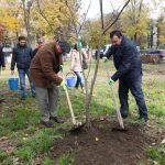 Campanie de plantare pomi în București