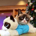 Stăpâna lui Grumpy Cat a devenit multimilionară în numai doi ani
