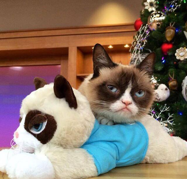 Maladie Grumpy Cat
