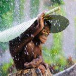 Fotografie de Andrew Suryono, Indonezia