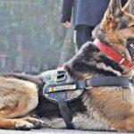 Max, câinele erou