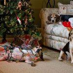 Animale de companie care distrug bradul de Crăciun Foto:imgur.com