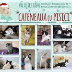 cafeneaua-cu-pisici