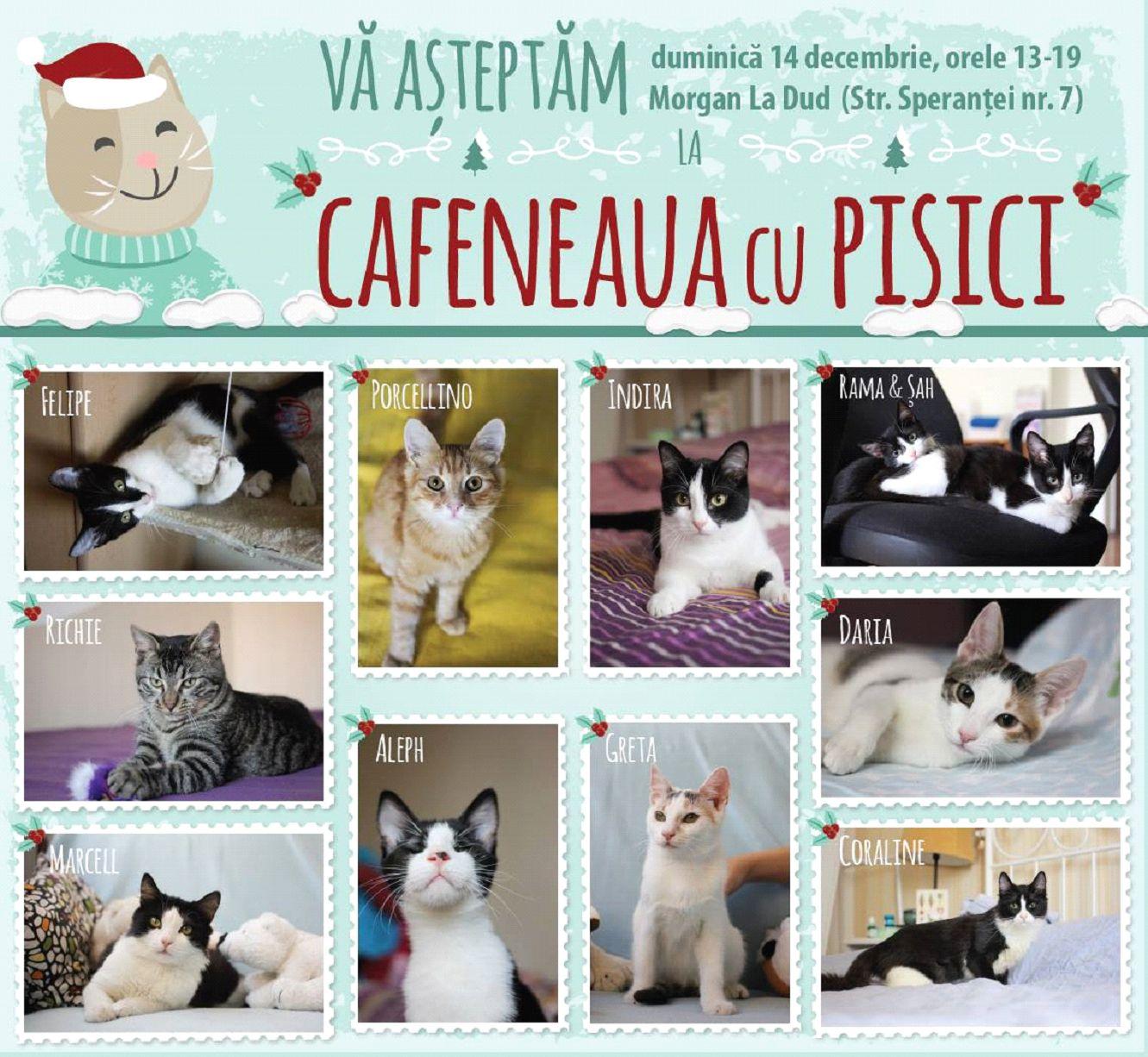cafeneaua cu pisici