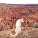 John și Wolf călătoresc împreună de doi ani Foto: Tumblr Johnandwolf