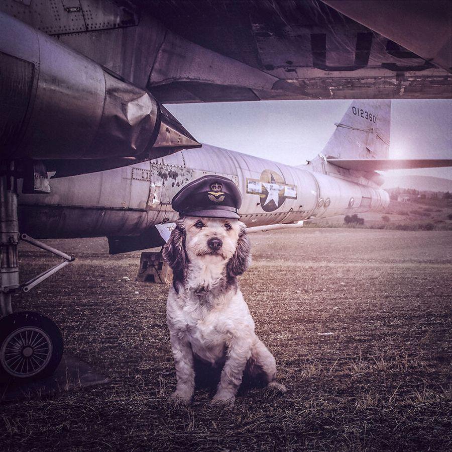câini fără adăpost