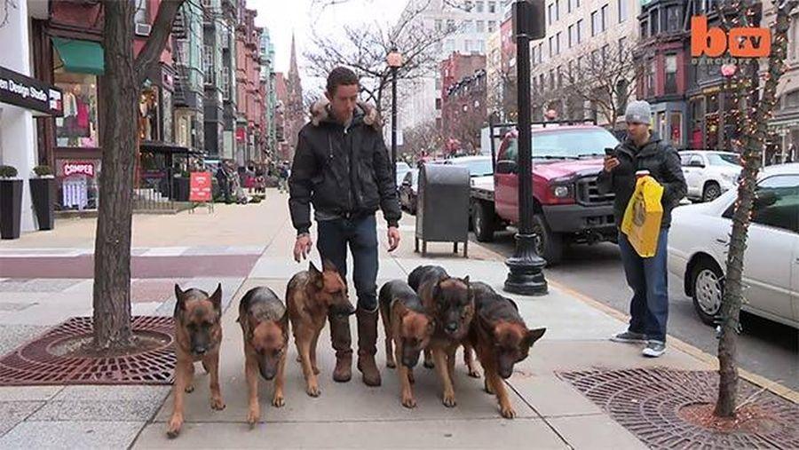 câini dresați