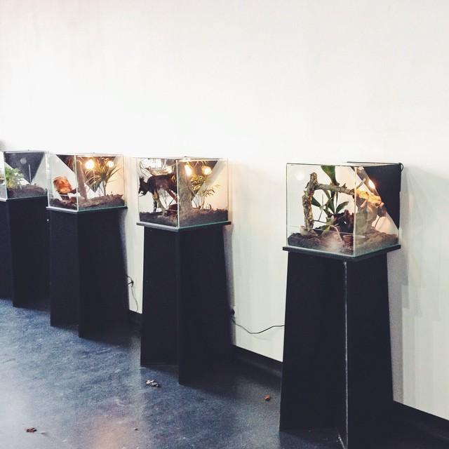 """Expoziție de păianjeni și scorpioni vii Foto: Facebook Muzeul Naţional de Istorie Naturală """"Grigore Antipa"""""""