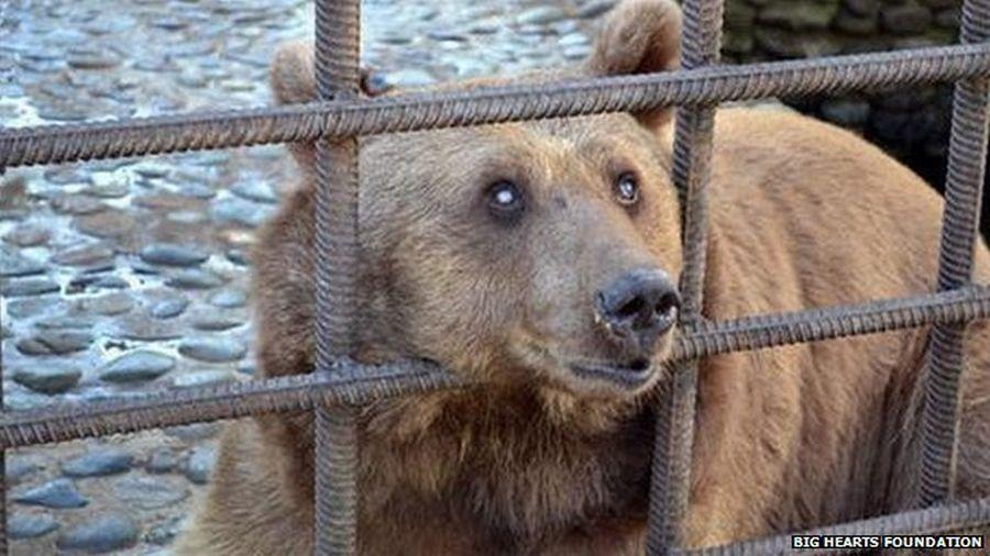 urși alcoolici
