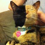 Pisicuța himeră Foto: Facebook Venus's Page – Amazing Chimera cat
