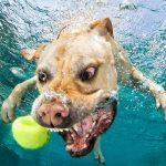 Câini sub apă Foto: Facebook Seth Casteel