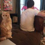 Pisicuța care stă în picioare Foto: Reddit.com