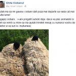 Anunțul de angajare dat de Ghiță Ciobanul pe Facebook