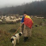 Ghiță Ciobanul angajează oieri