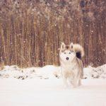 Câini pregătiți pentru adopție Foto:animalsheltersurvivors.com