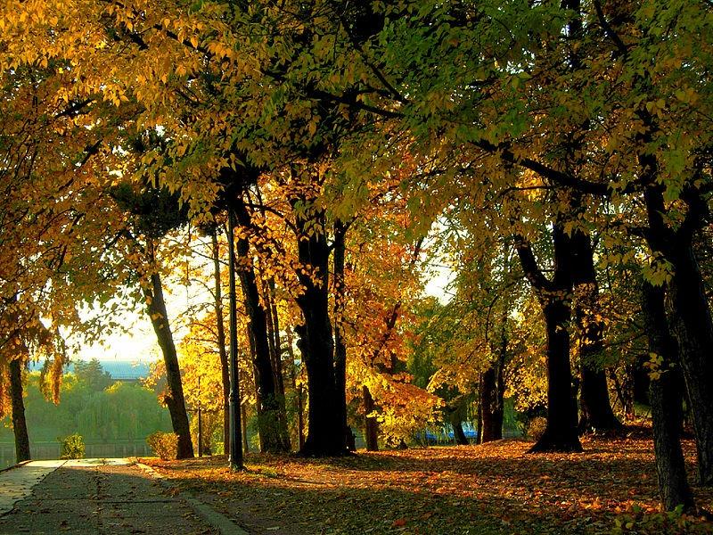 Parcul Herăstrău. Foto: Goldmund100 via Wikimedia Commons