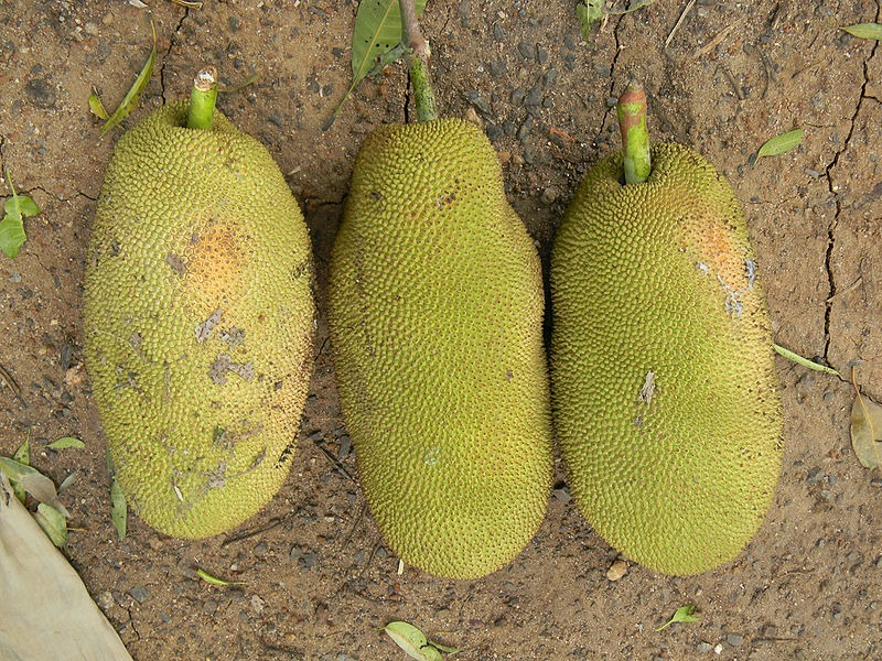 FOTO: Krupasindhu Muduli /Wikimedia Commons