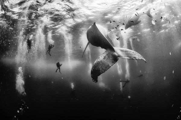 Fotografia balenei care înoată alături de puiul său a câștigat premiul I. Foto: Anuar Patjan /  National Geographic Traveler Photo Contest 2015