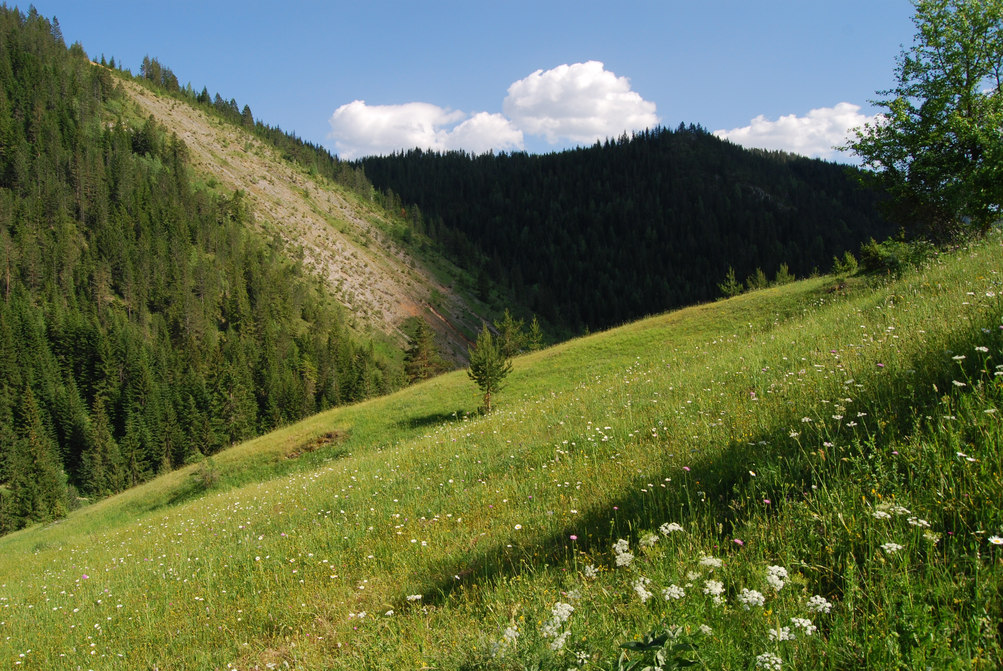 Pădure albaneză (wikimedia commons)
