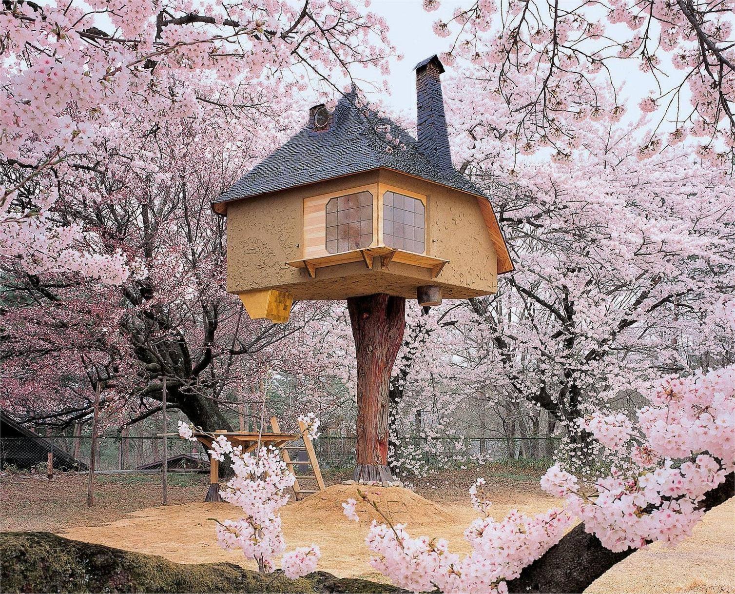 cele mai frumoase case din copaci