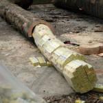 Contrabandiștii ascund țigări și în trunchiuri de copaci (Facebook Poliția de Frontieră Română)