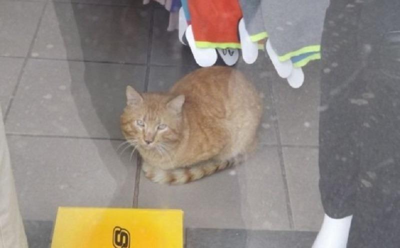 Pisică închisă de ANAF într-un magazin din Turnu Severin (ziaruldeiasi.ro)