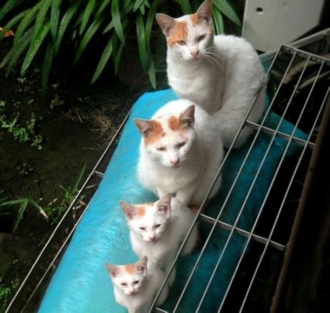 pisici-02