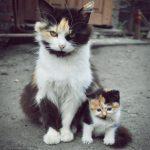 pisici-05