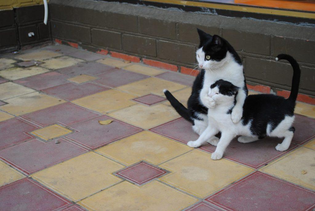 pisici-07