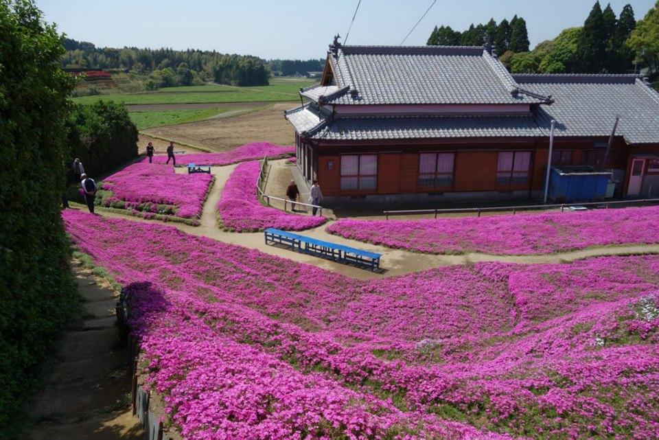 lectie de devotament gradina cu flori japonia
