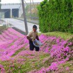 lectie-de-devotament-gradina-flori-japonia-02