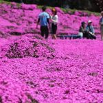 lectie-de-devotament-gradina-flori-japonia-08