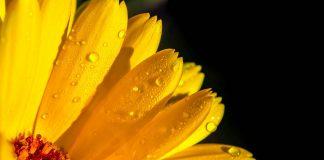 FOTO:Myriams-Fotos/Pixabay.com