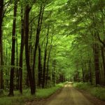 ținutul pădurenilor
