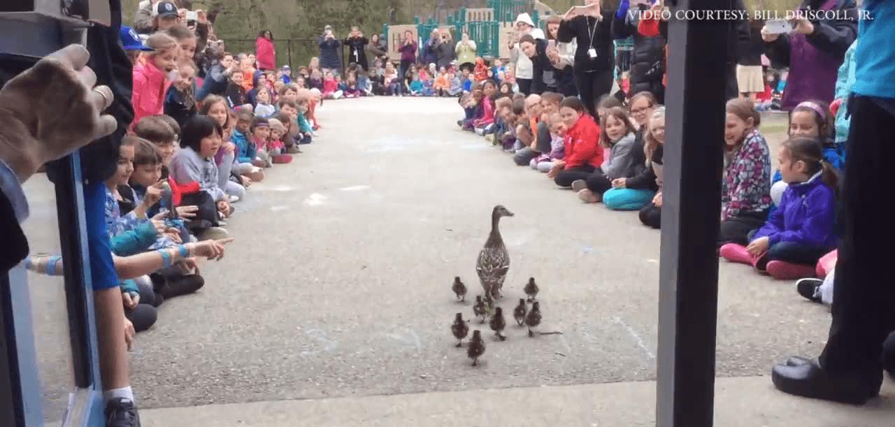 O tradiție splendidă este găzduită de o școală primară din SUA (Youtube)