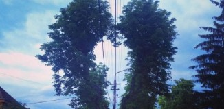 Copacul în formă de inimă de la Sibiu (Vocea Transilvaniei)