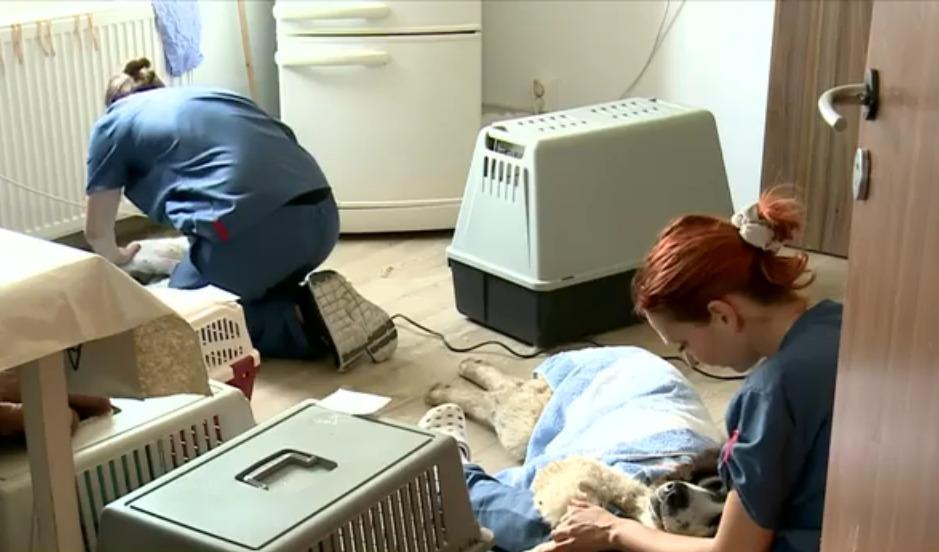 primul spital pentru animale fără stăpân din românia