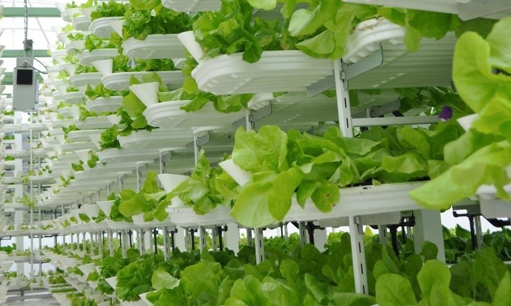 Fermele verticale ar putea însemna viitorul agriculturii (Wikimedia Commons)