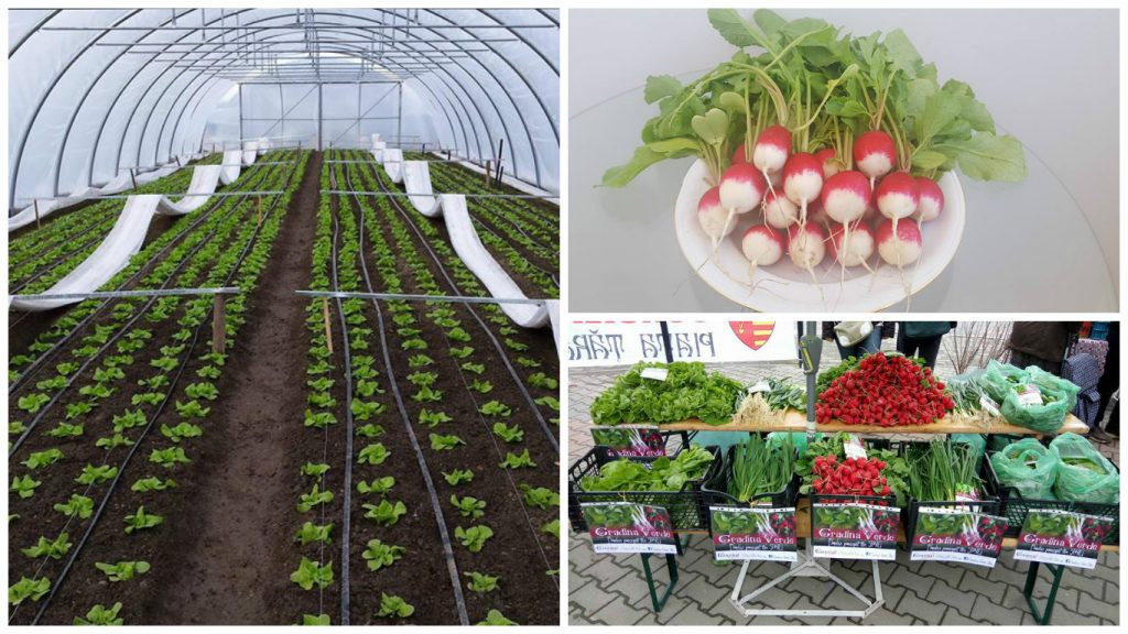 legume si verdeturi din solarii