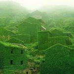 sat-parasit-vegetatie-china-06