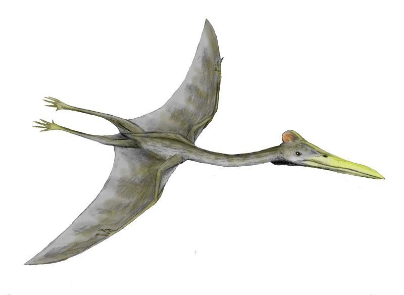Hatzegopteryx cel mai mare dinozaur zburător din lume