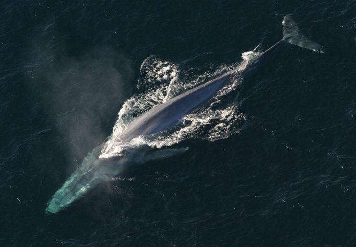 balenă apă ocean