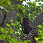 FOTO: Societatea Ornitologică Română