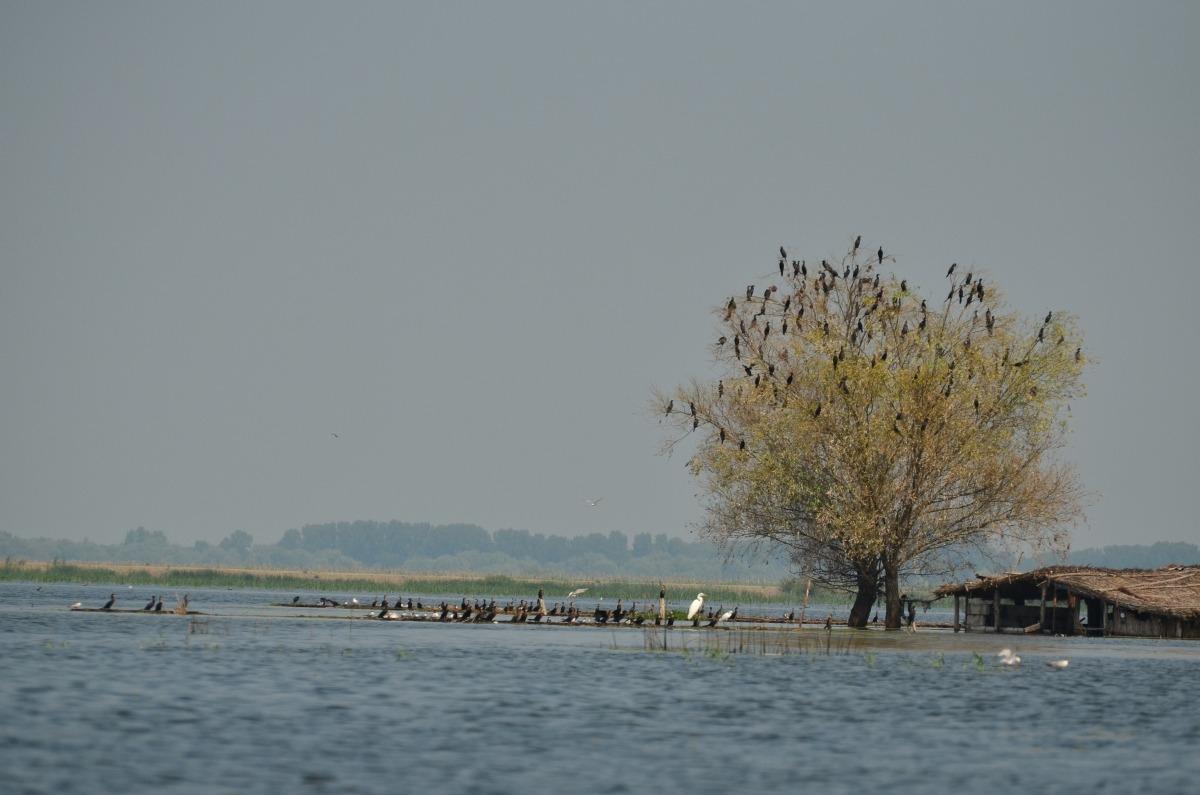 deltă inundată mahmudia carasuhat