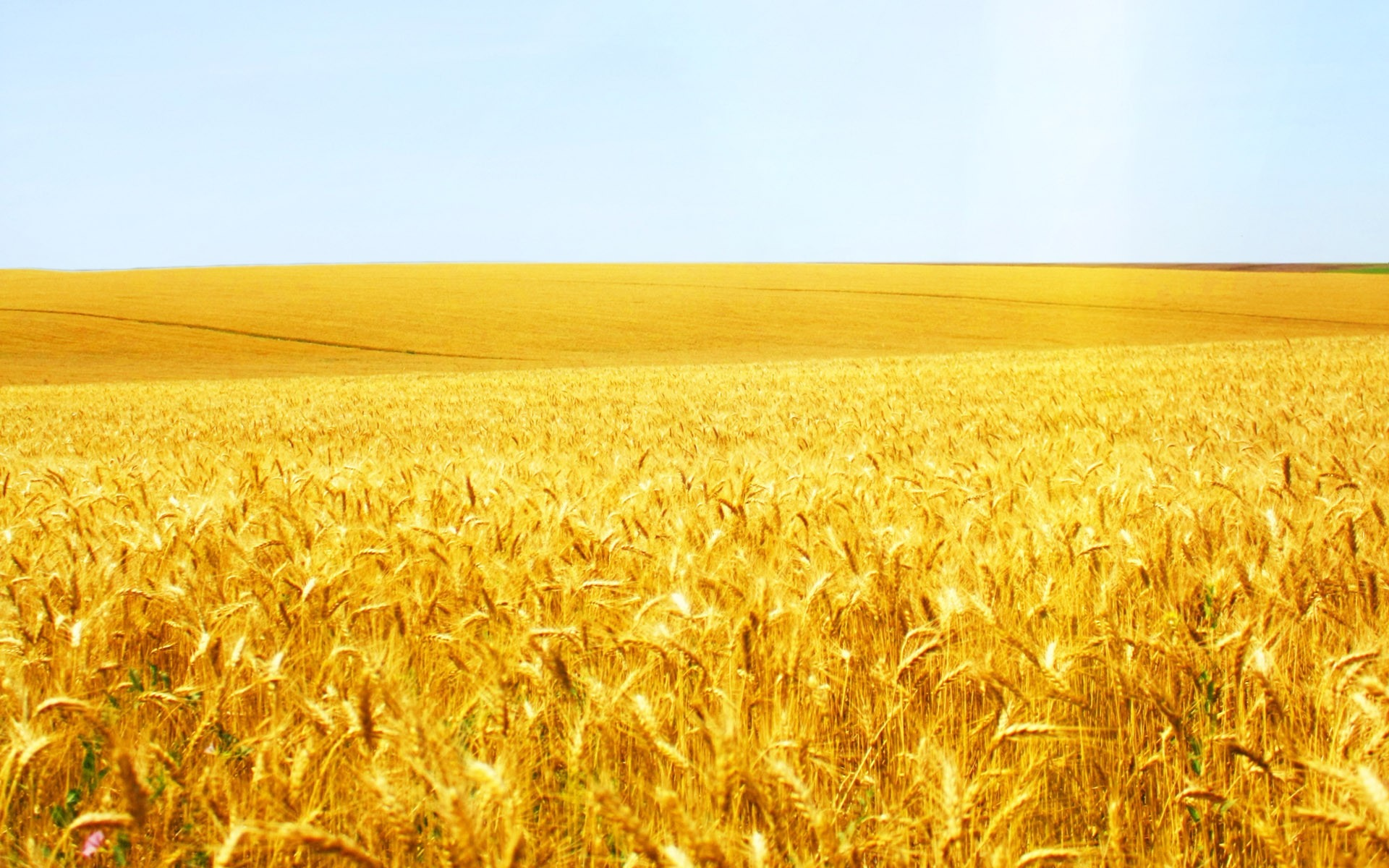 Agricultura românească se poate lăuda cu o producție excelentă în 2017 (Wikimedia Commons)